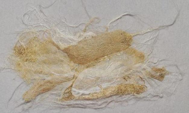 Erste Experimente mit Silk Paper